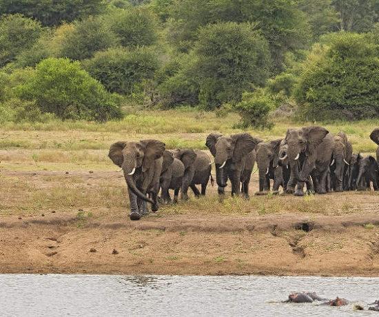 Olifanten - levenskracht in de natuur