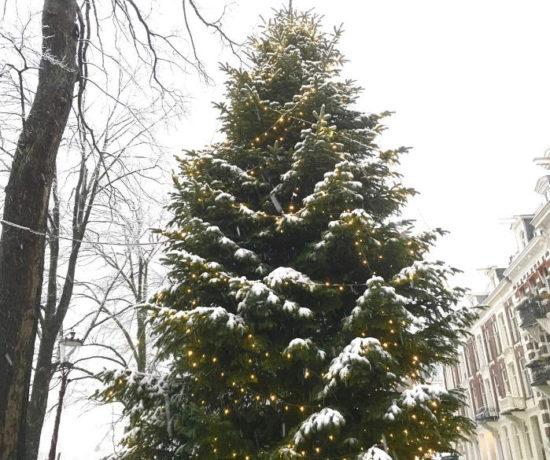 kerstboom - adventstijd